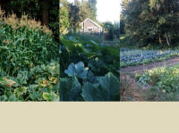 PORT OF SEATTLE'S SOUTH KING COUNTY FUNDS SOVEREIGNTY FARMS