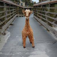 "My ""street giraffe"" path..."